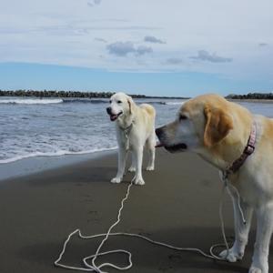 きょうは海です 兄弟わんこ