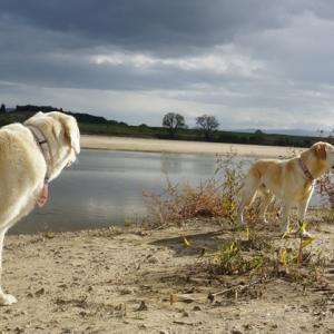 大きな河原を発見