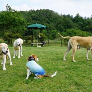ドッグラン 3犬種5頭
