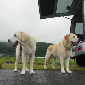 散歩の時間に雨が降ります