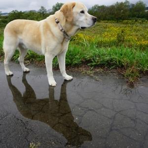 冷たい雨の日 午後散歩
