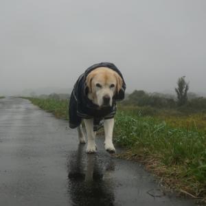 カッパ着て雨散歩