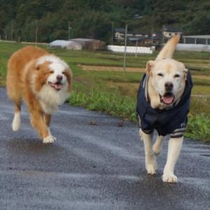いつもの倍の午後散歩