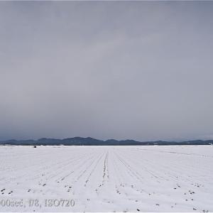 雪の中のマガン