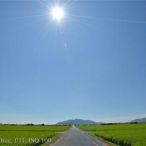 猛暑の斐川平野