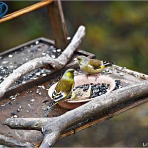 今日の野鳥たち・・・。