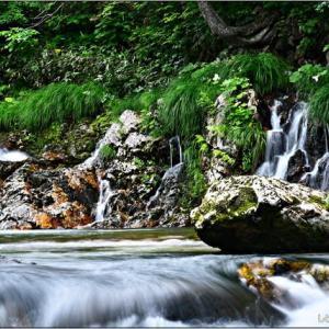 撮り出・・・ライオンの滝。
