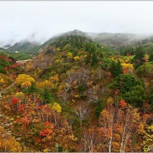 十勝岳温泉の紅葉・・・。