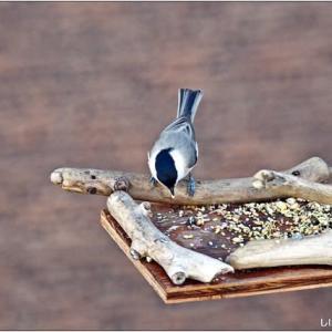 今日の訪問者(鳥)・・・。