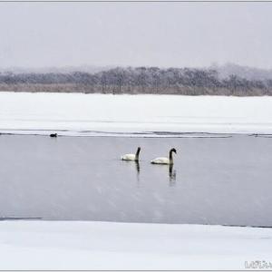 モノクロのウトナイ湖・・・。