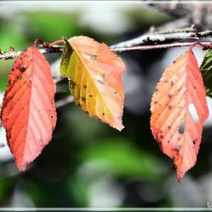 秋色・・・。