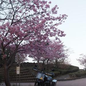 桜ツーリング 後編〜桜も見るしダートも走る