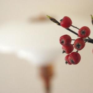 秋は「実もの」がおすすめ〜リビングのポールセンと、庭の恵み〜