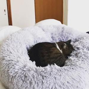お気に入りすぎて埋もれるのが日課…わが家の猫をだめにするふわふわベッド