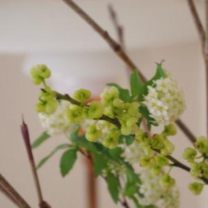 【ポイントアップデー♪】ポチレポ第3弾☆花粉症でも快適に過ごすためのものと40の学びごと
