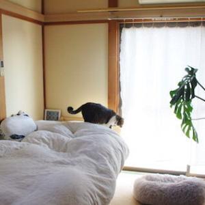 【子供用のベッド 、買いました】譲れない条件をオールクリアした、1万円代の天然剤ベッド