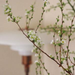 〈一足先にリビングで楽しむ春〉お手入れも簡単・長く楽しめる枝ものを使った『花のある暮らし』