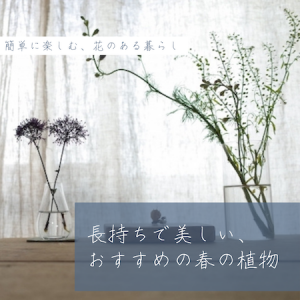 〈長く、簡単に〉コスパ良し♪おうちが素敵になるおすすめ植物3つ