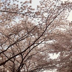 【お得すぎるスタートダッシュクーポン】模様替え計画!とお花見の週末