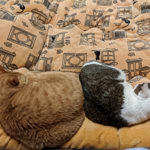 猫と人は違うのか