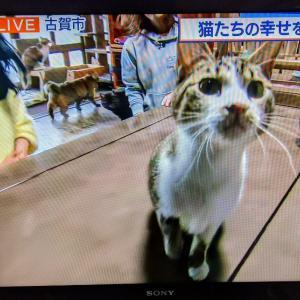 猫たちの幸せを願うカフェ