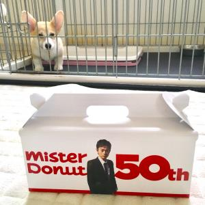 子犬コーギーツキ:ミスドの菅田将暉ボックスと対面