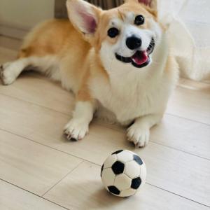 サッカーボールで遊ぶ?