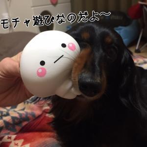 オチリまん丸〜っ!