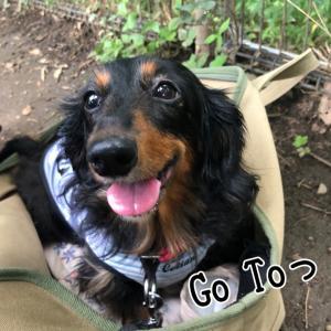 Go Toっ!