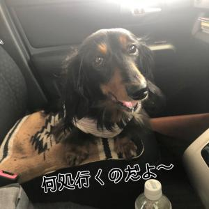 誕生日旅行@道中編っ!