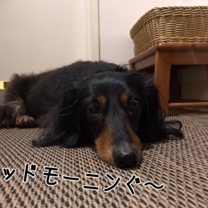 誕生日旅行@室内ドッグラン編っ!