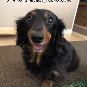 うちの子記念日っ!