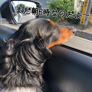 道中まさかの遭遇っ!