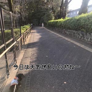 小熊さんと平日散歩っ!