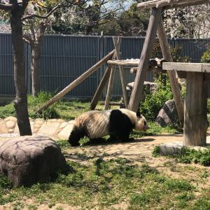 神戸のパンダ観覧は抽選