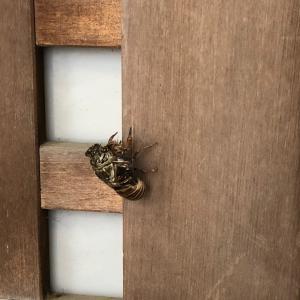 蝉 と ヘアドネーション