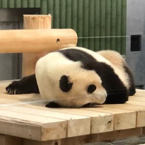 動物園18回目 と 色鉛筆画