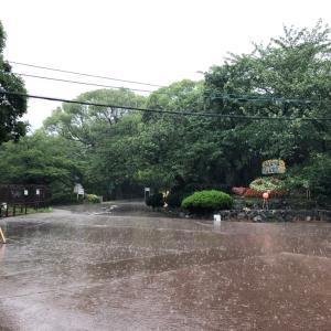 大雨洪水警報の中、動物園