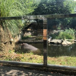 今日も動物園でオラウータンが来たよ~!