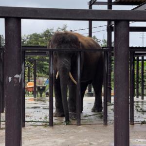 象の結希くんに会いに