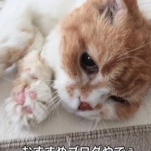 私のお気に入り猫ブログ