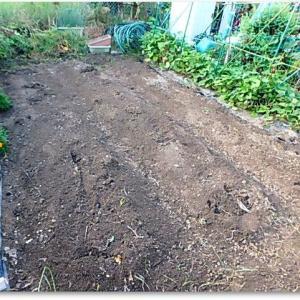 菜園復活作業ver.4 耕運準備ができた♪