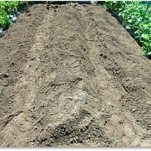 菜園復活作業ver.6 畝ができた♪