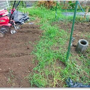 耕作くんに働いてもらった。。。