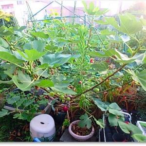 放置菜園の様子