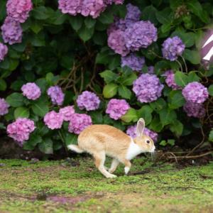 紫陽花さんの前でおおはしゃぎ(^^♪ ( 大久野島 )