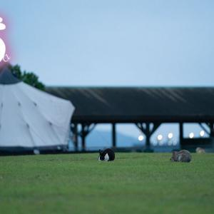 たくさんお話が出来ました。最終回。 大久野島遠征レポ7月2日 ( 大久野島 )