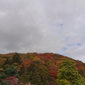 紅葉を見に、栗山公園へ