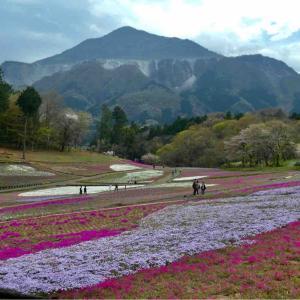 東秩父村「移住体験」3泊4日3日目は羊山公園公園へ