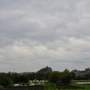 黒目川にヒドリガモ